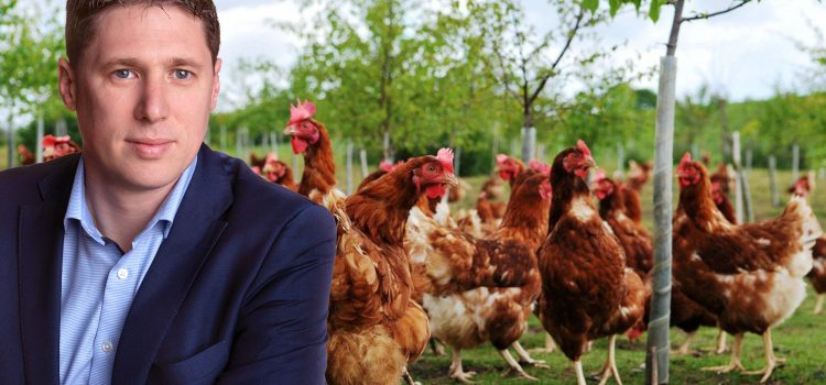 Carthy calls for Bird Flu compensation for poultry farmers